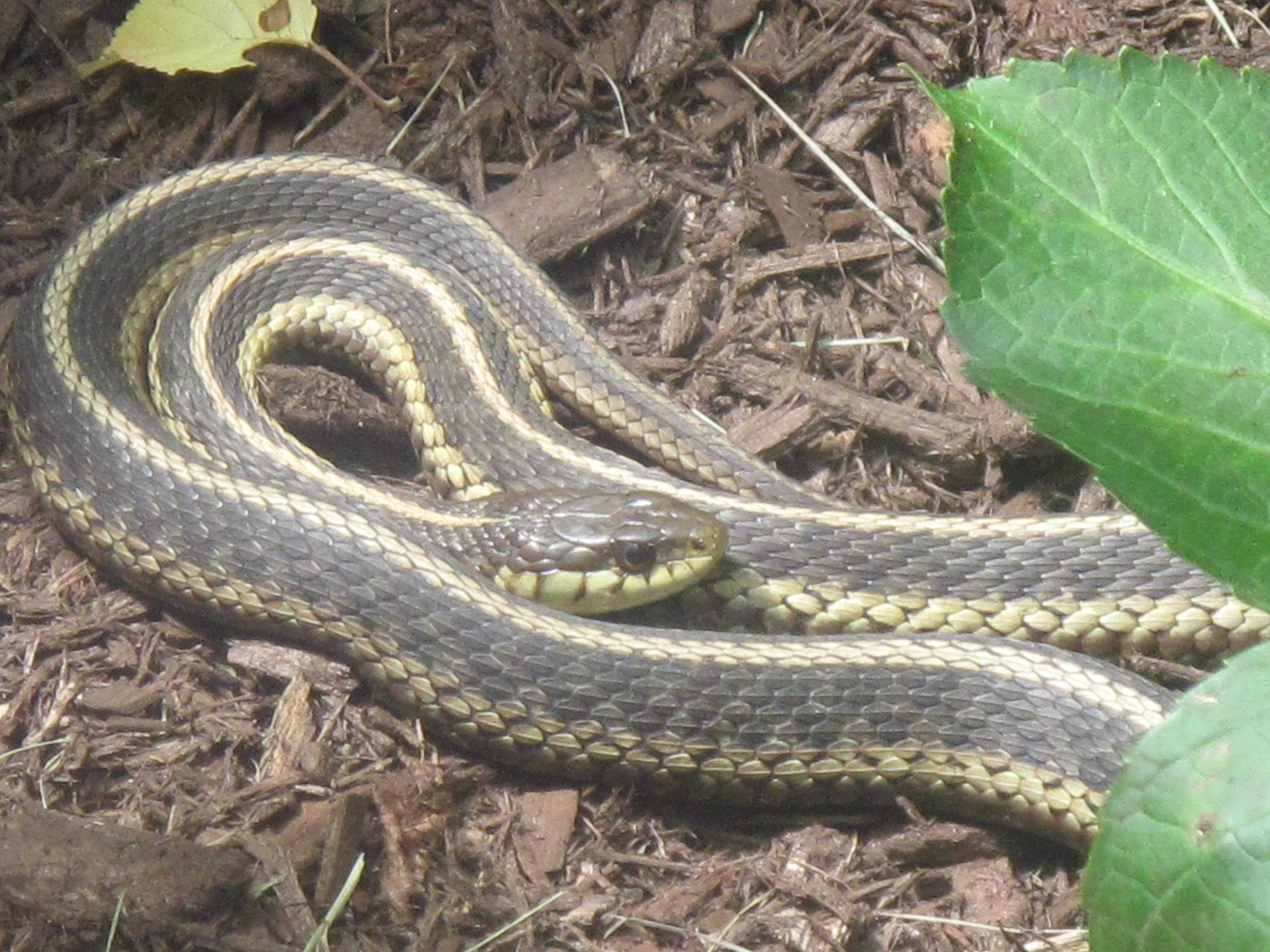 A Snake Sighting And Then A House For Sale | Acorns On Glen